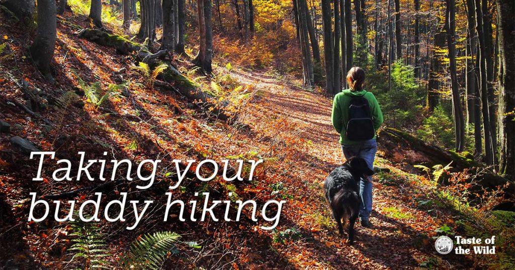 מורה דרך: טיול בטבע עם הכלב